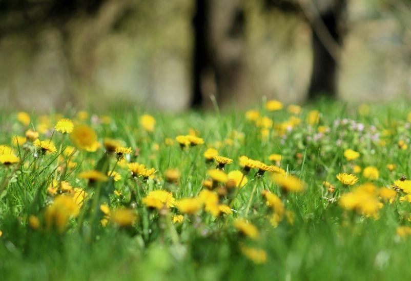 ekologija-zastita-zivotne-sredine